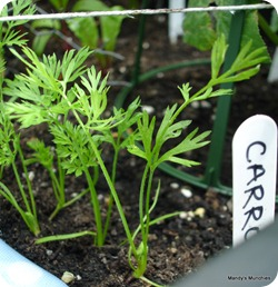 Carrots 25 June detail