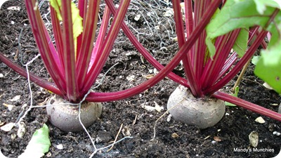 Beets 5 Sept