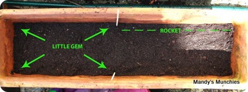 10-04 Lettuce trough