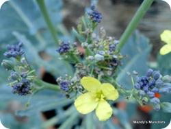 06-07 PSB flower