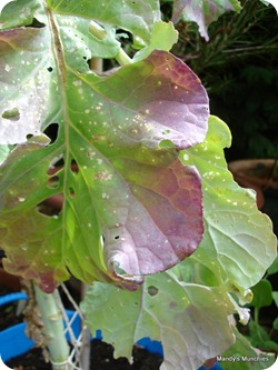 11-09 PSB leaves