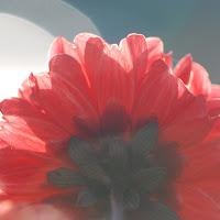 DSC_0848a.jpg