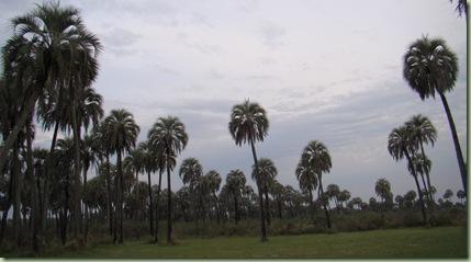 Argentina2010b 091