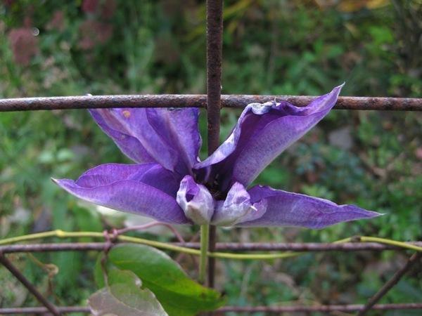 2010-10-31 De mest utholdende blomstene (1)