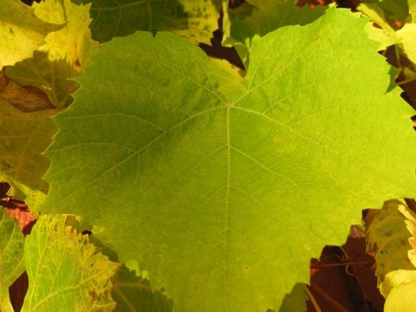 2010-10-12 Drueblader (4)