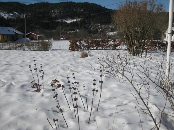 2011-03-05 Hagen på Møll (2)