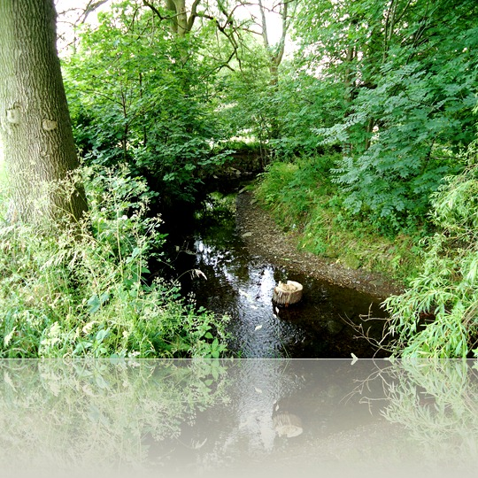 The beck from the bridge
