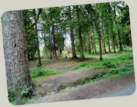 Amongst the trees in Balloch Park