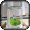 Blue Mushroom Moss Terrarium