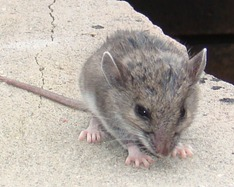 mouseclimb1608