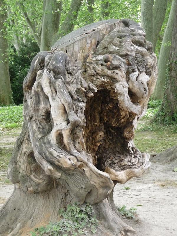 Souche d 39 arbre joliment monstrueuse - Produit destructeur de souche d arbre ...