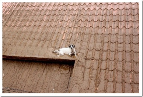 dog on muddy roof