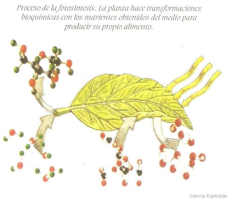 [proceso de la fotosintesis[7].jpg]