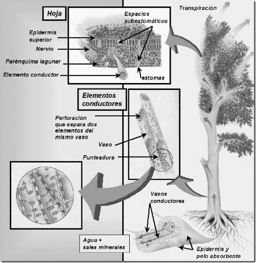 absorcion plantas