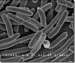 la reproduccion de una bacteria