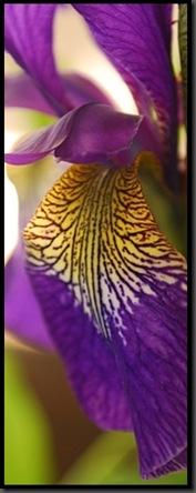 ida-blomst