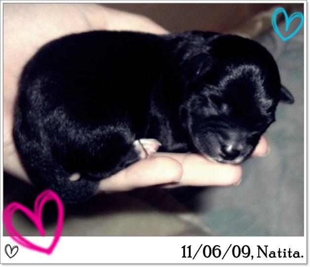11·6·9 Cachorros de Natita 013
