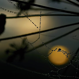 °°°°°°°°°° ° by Katka Kozáková - Nature Up Close Webs