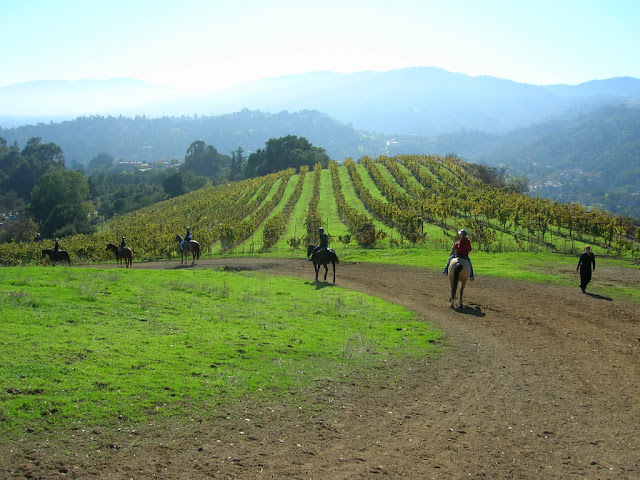 Vinyards and horses!