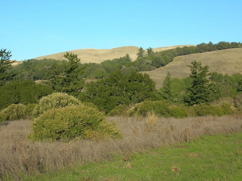 Borel Hill