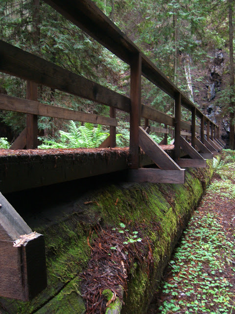 Bridge on a fallen tree