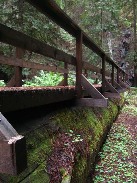 Bridge on a fallen tree