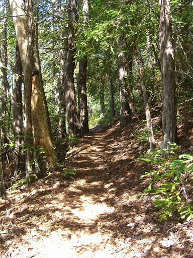 Delightful single track on the Howard King Trail
