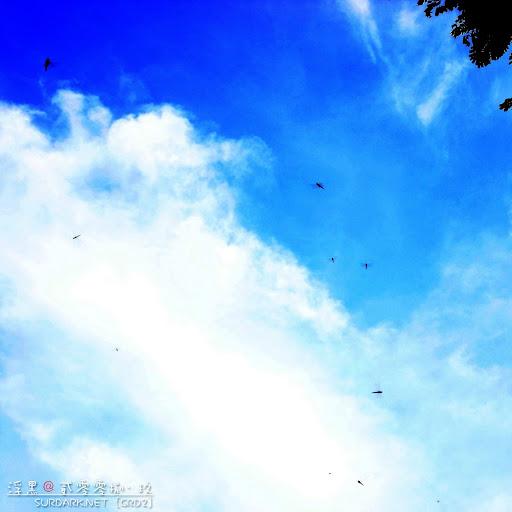 狐尾山的蜻蜓