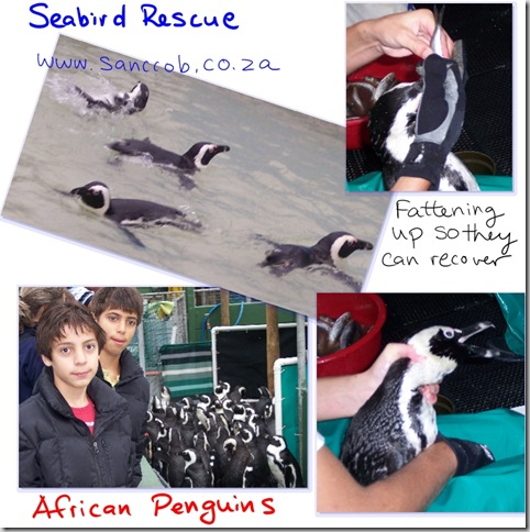 rescuedpenguins