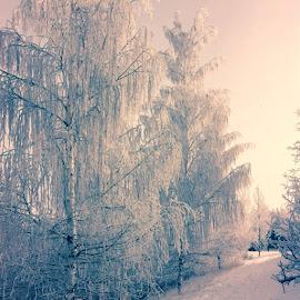 snowy walks by Eimear Plower - Landscapes Weather