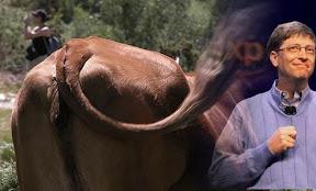 vaca y gates