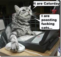 cat posting
