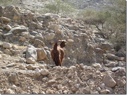 Oman Februarry 2011 035