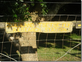 Zululand Tse- Tse  Fly Research Station