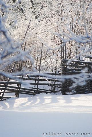 vinterbilder feb 2011 004