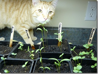 milo and seedlings