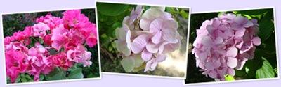 Visualizza fleurs