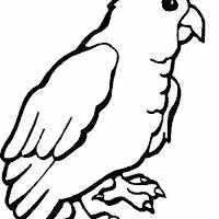 parrot_gif.jpg