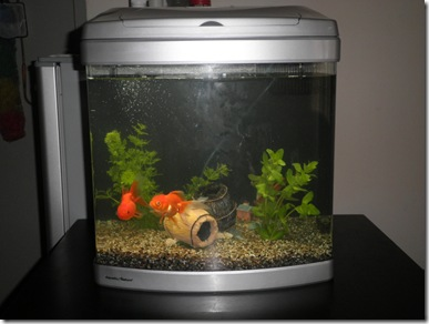 akuarium baru 6