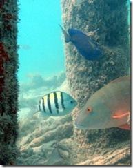 dry_tortugas_snorkeling-236x300
