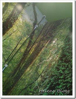 Skogstema 2