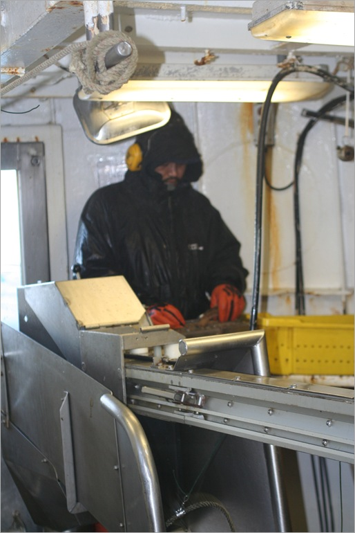 This is the auto-baiter machine. the guy here is feeding squid into it and the machine put cuts and baits the hooks as they go out.
