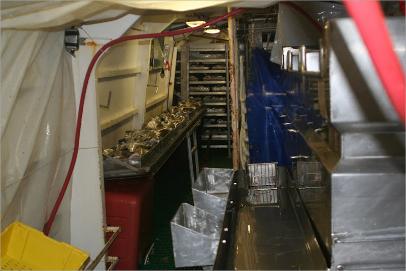 this is the gutting station, I thought I would spare everyone the gory photos of this part of the process. the gutted fish are thrown into the bins to the right.