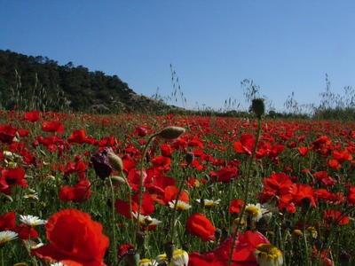 La-primavera-se-adelanta_imagenGaleria