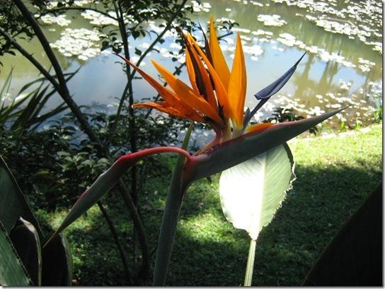 2010-04-18 Jardim Botânico 36