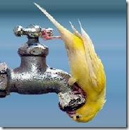 Água 2