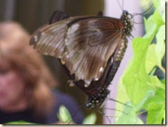 Butterfly sex Blur