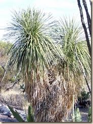Yucca 2 11-26-2009 8-25-17 AM 1728x2304