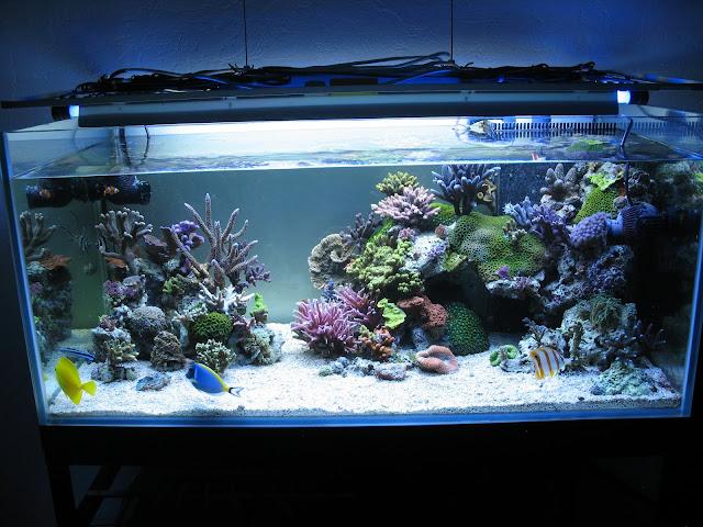 darn de la rochelle  Aquarium%2022%2011%2010