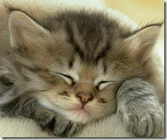 uyuyan_kedi